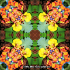 Psychedelic Kaleidoscope Screensaver Carnation Columbine Pansy Mandala Boho Chic Bohemian New Age Sacred Geometry Number 1