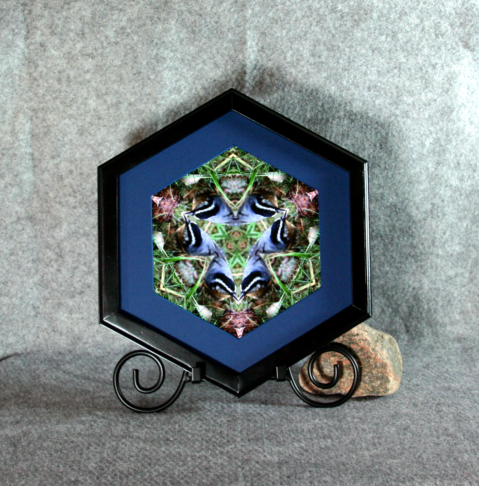 Nuthatch Songbird Wall Decor Photograph Sacred Geometry Kaleidoscope Nestling Nuthatch