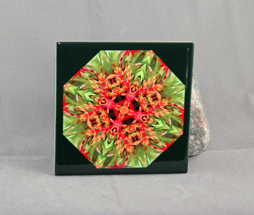 Bromeliad Decorative Ceramic Tile Coaster Trivet Spoon Rest Flower Citrus Starburst